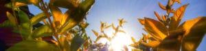 fleurs champ soleil ciel